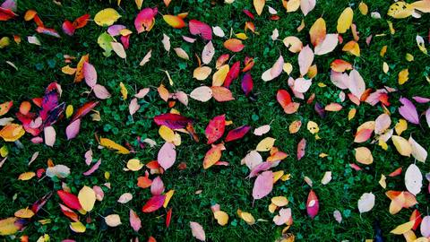Colourful leaves on the grass